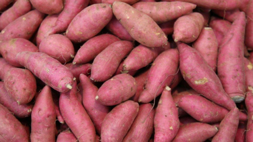 Covid-19 disrupts Nigeria's sweet potato success story