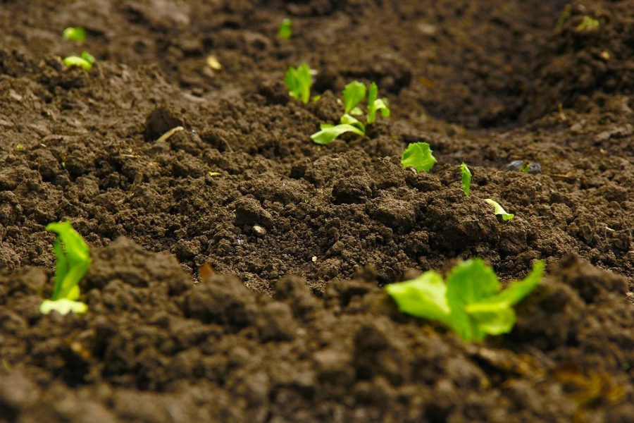 Our Soil, Our Commonwealth; Advancing Soil Health in Sub Saharan Africa