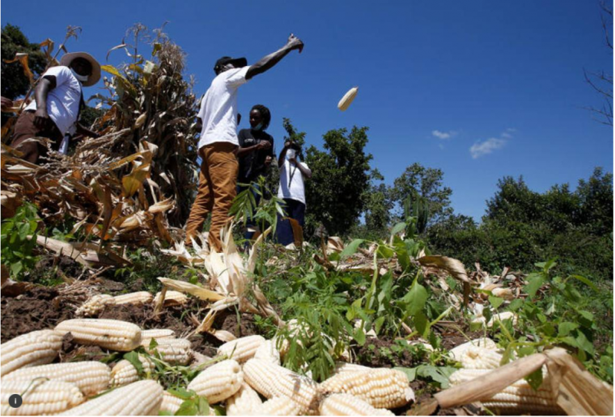 African Development Bank backs young 'agripreneurs' to beat climate change
