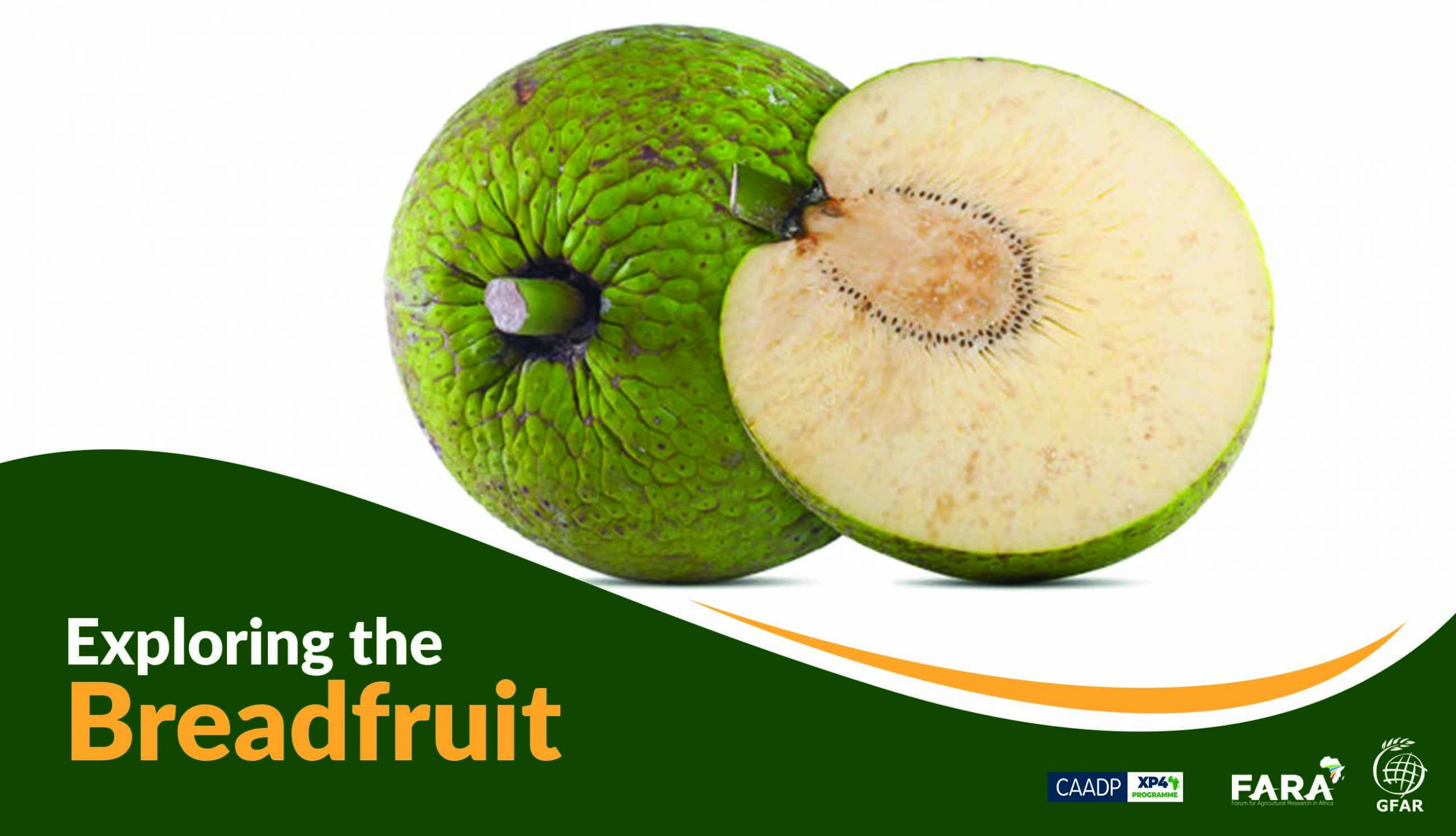Exploring the Breadfruit… a forgotten Africa food