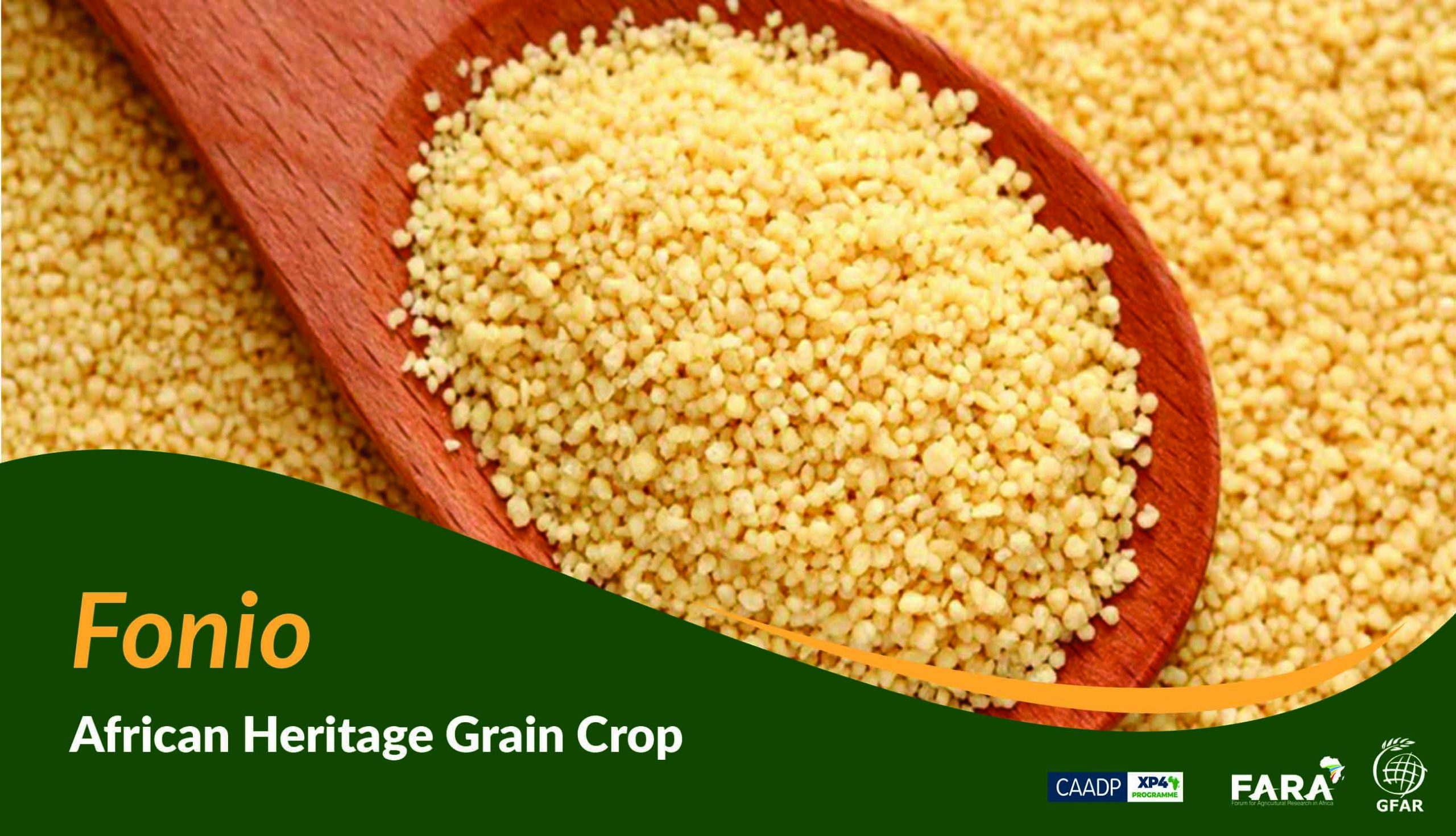 How the African Heritage Grain Crop became an Orphan Crop!